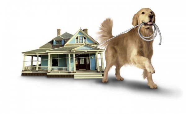 Tips For Moving To A New Home With Pets